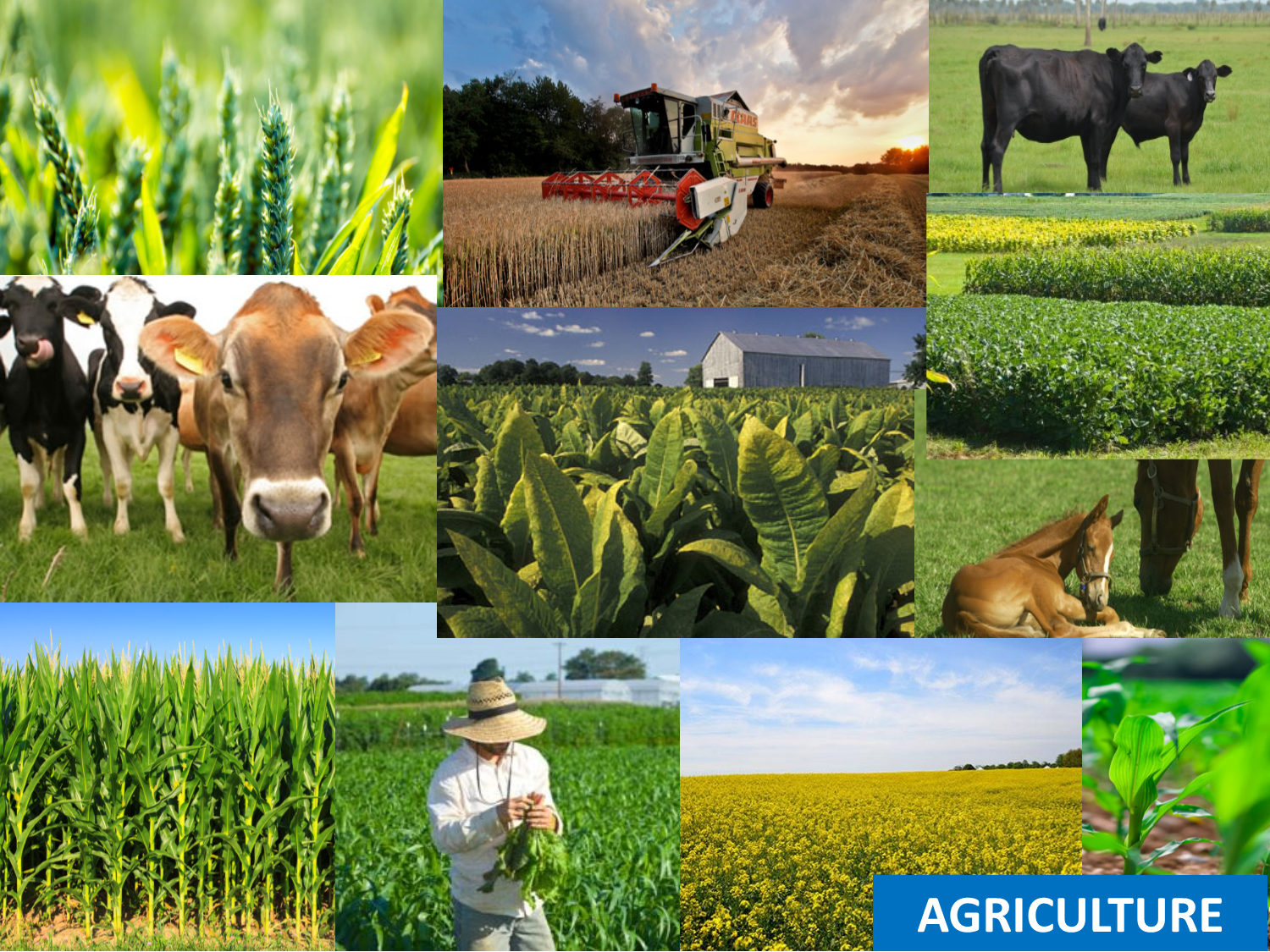 agriculture natural resources boyle county
